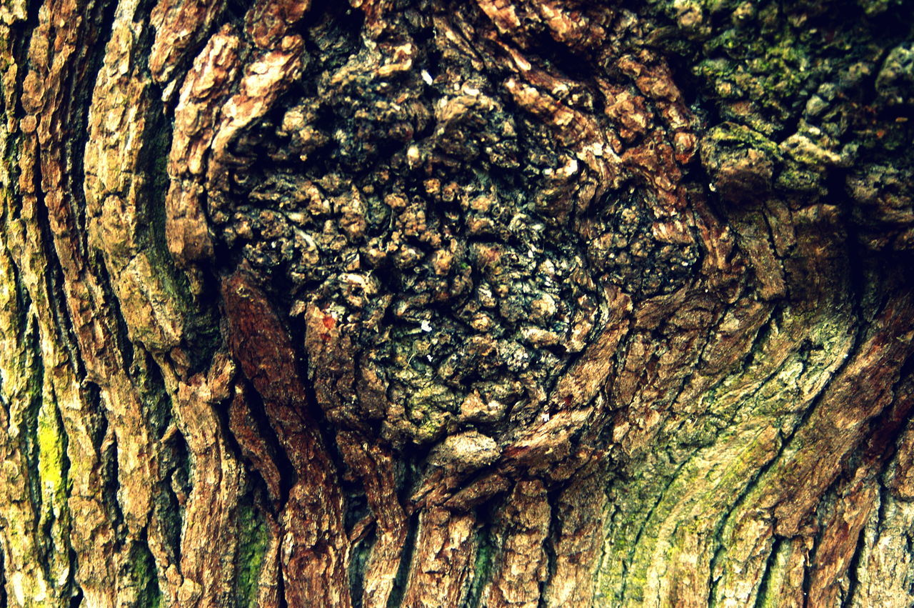 work Jan 2017 Animal Themes Backgrounds Close-up Day Full Frame Nature No People Outdoors Textured  Tree Tree Trunk