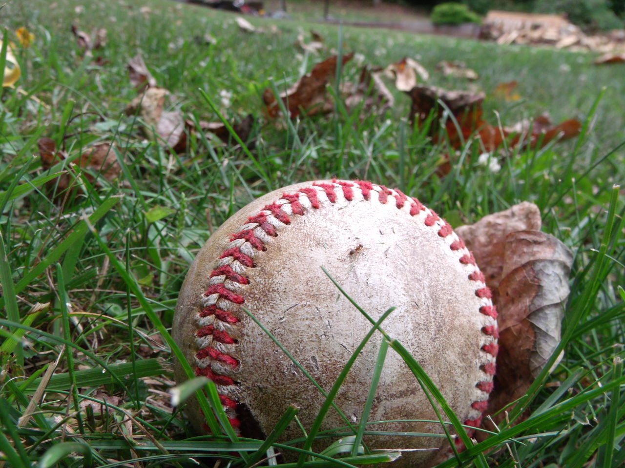Home Run #ballislife #baseball Close-up Field Focus On Foreground Grass Grassy Growth Nature Outdoors Plant