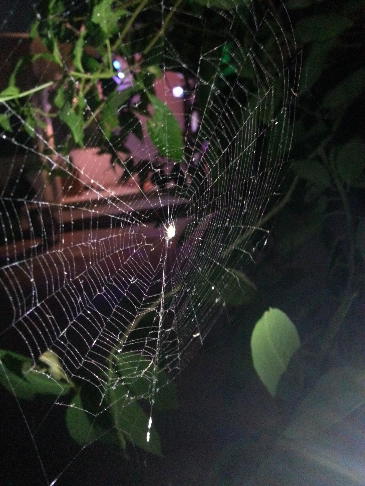 Spider Spider Web Close-up Flash Spiderworld Mobile_shot Mobile_photographer Night