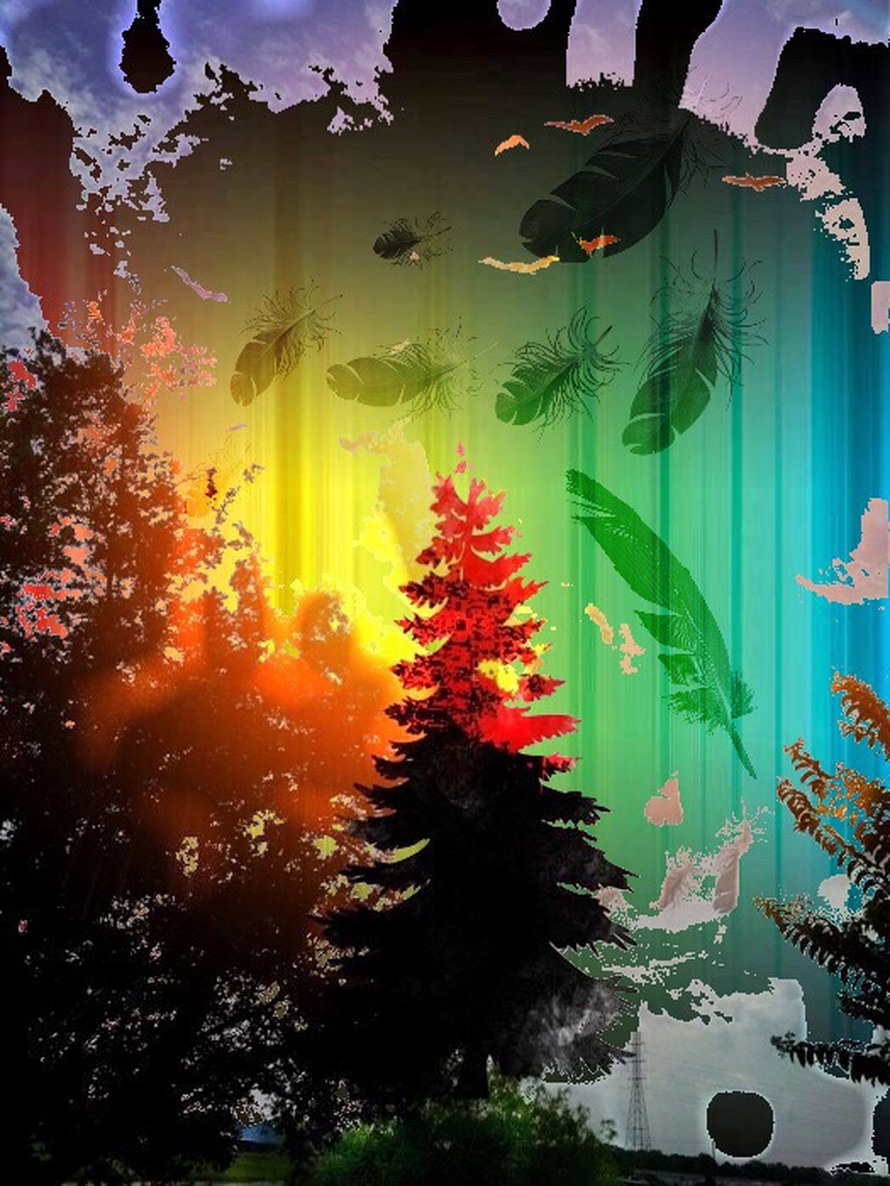 indoors, orange color, tree, multi colored, plant, water, nature, growth, transparent, celebration, lifestyles, reflection, beauty in nature, sunset, illuminated, glass - material, flower