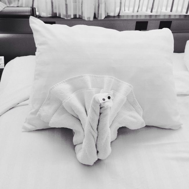 Towel Animal Cruise Ship Hotel Room Bw_collection