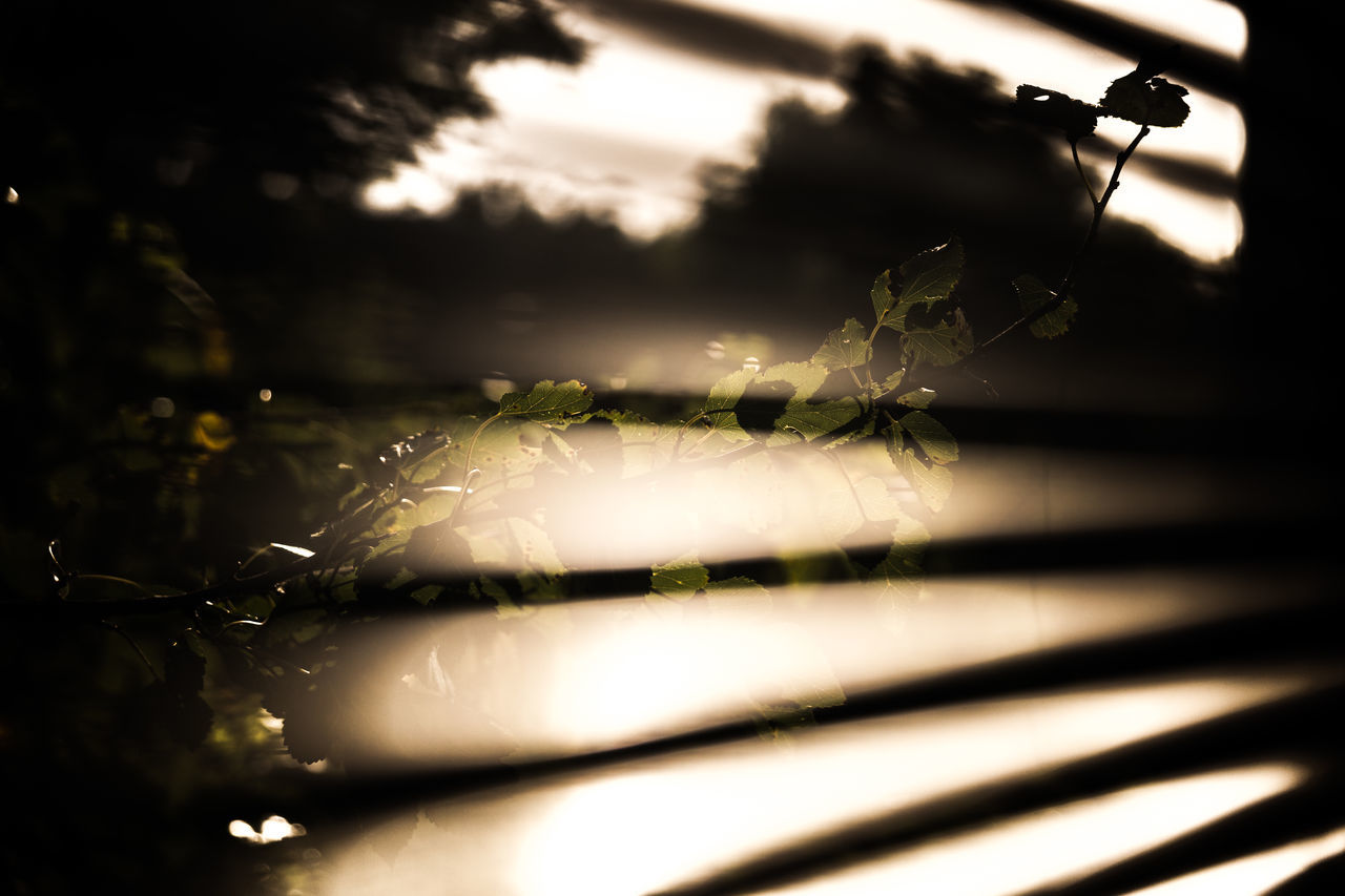 Plant Seen Through Blinds On Sunny Day