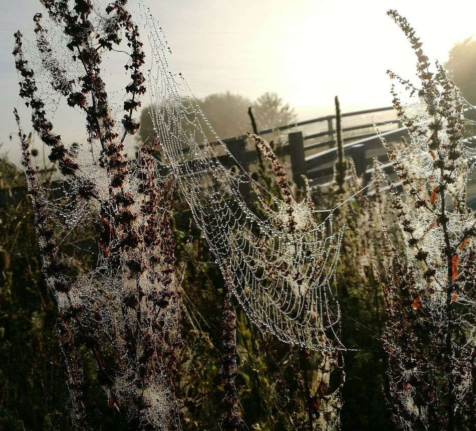 Beauty In Nature Scenics Spider Web, Dew, Morning, .no Filter.no Edit