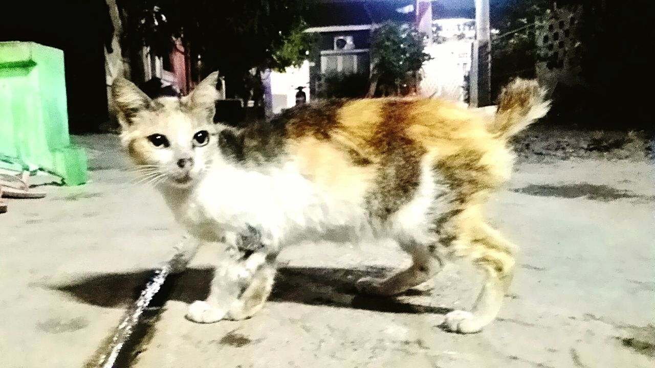 Hard work and hard lives for felines in Bekasi Rough Life Hard Life Street Cats