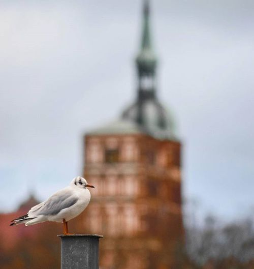 Na? In welcher Stadt habe ich die Möwe fotografiert? 😏| In which town I photographed this seagull? Seagull Möwe Sea Balticsea Mv_liebe Mvliebe Baltic Ostsee Team_photunique 1x1 Birds Bird