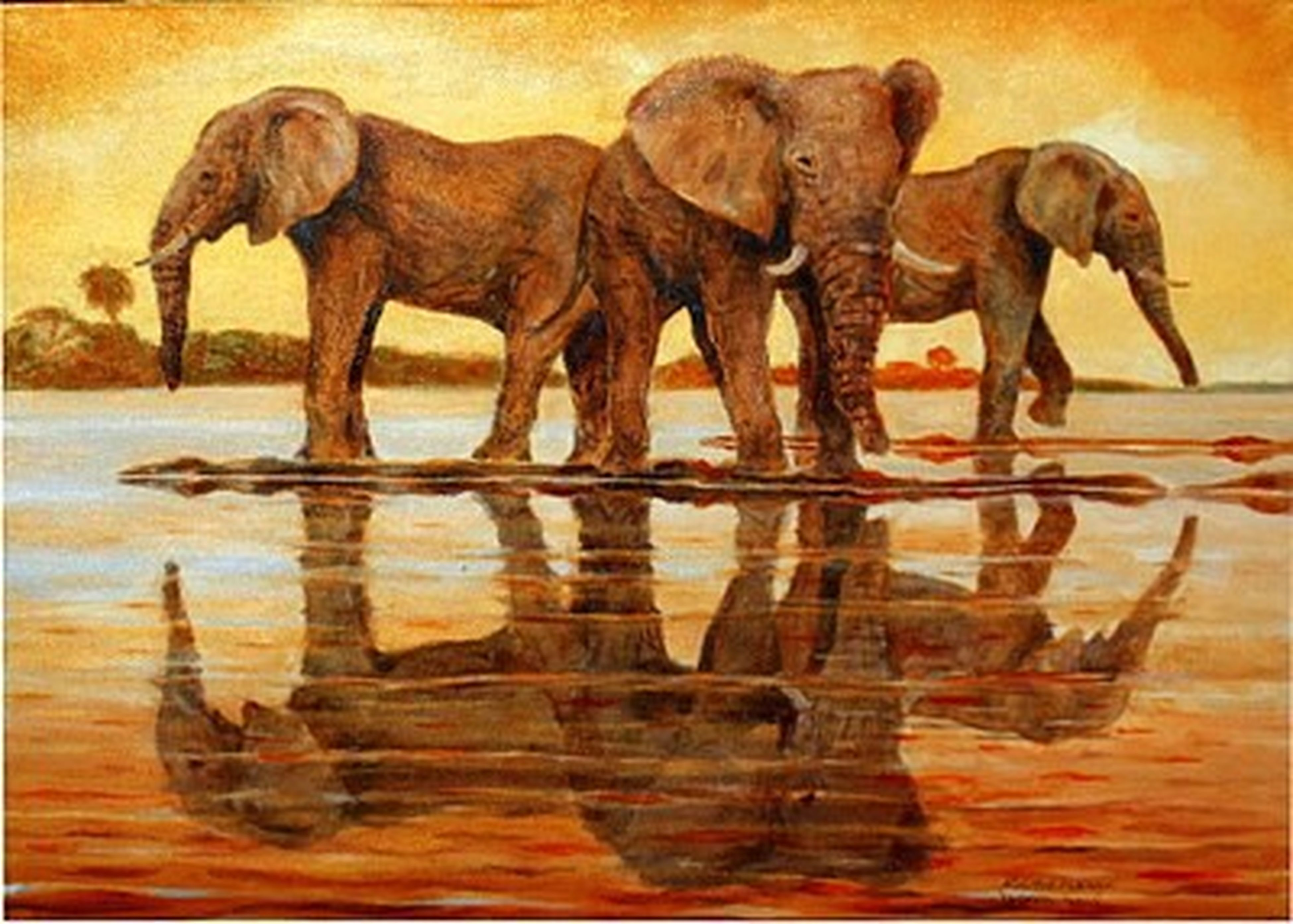 animal themes, mammal, domestic animals, one animal, two animals, animals in the wild, wildlife, horse, zoology, three animals, standing, water, reflection, full length, animals in captivity, side view, no people, livestock, day, elephant