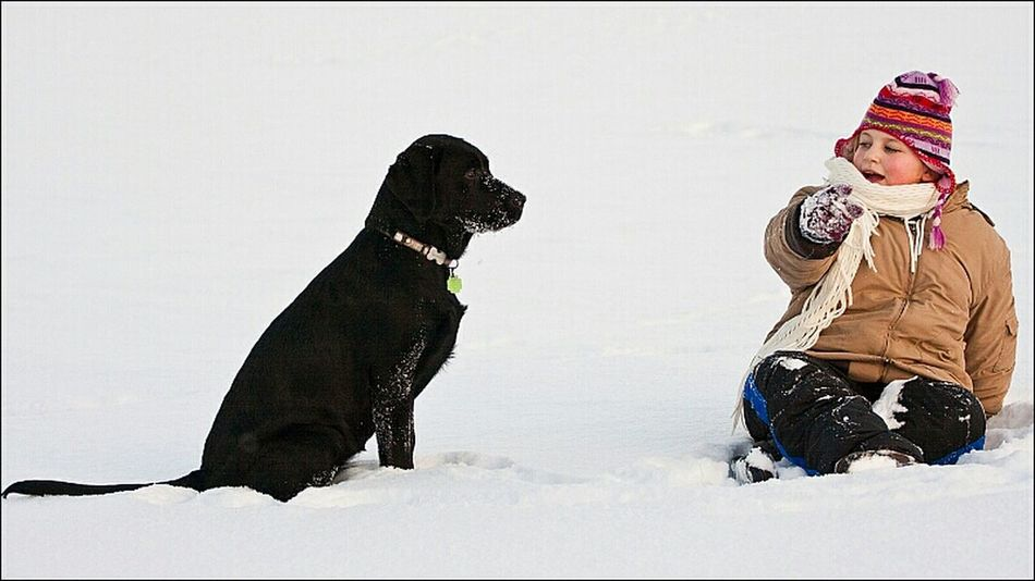 Winter Snow Winter Wonderland Labrador Labrador Retriever Blacklabrador Blacklab Retriever