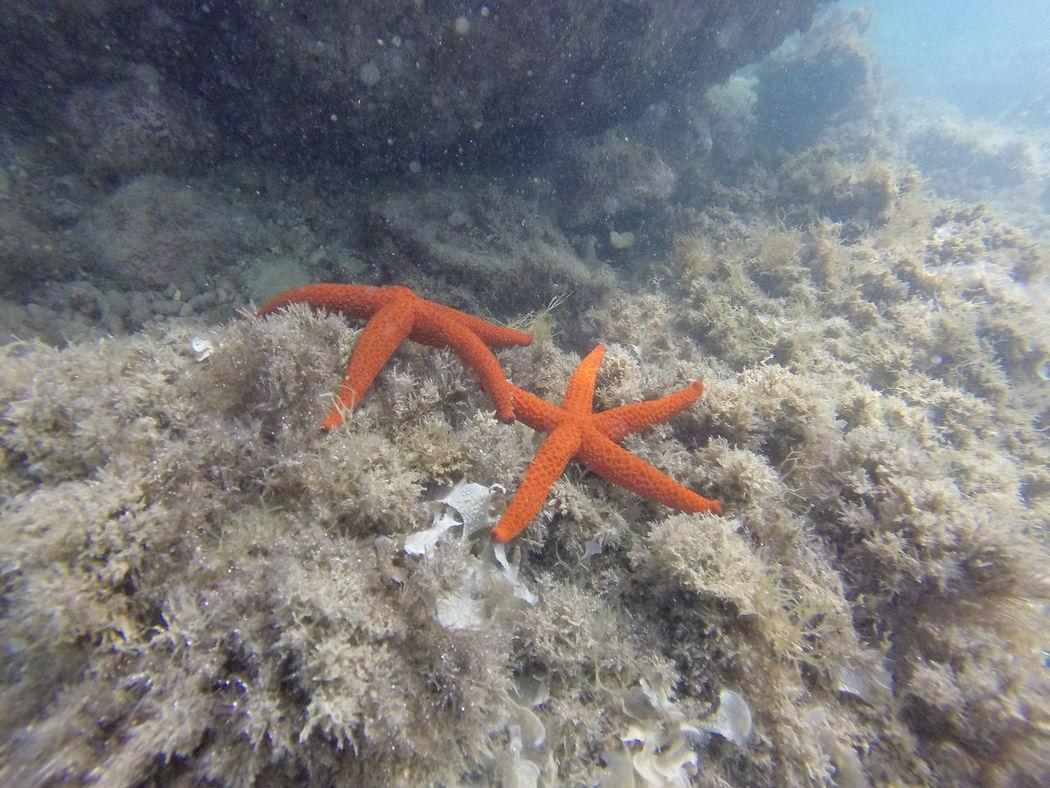 Meraviglie del mare Beach Photography Solitude Beauty In Nature Sea Submarine World