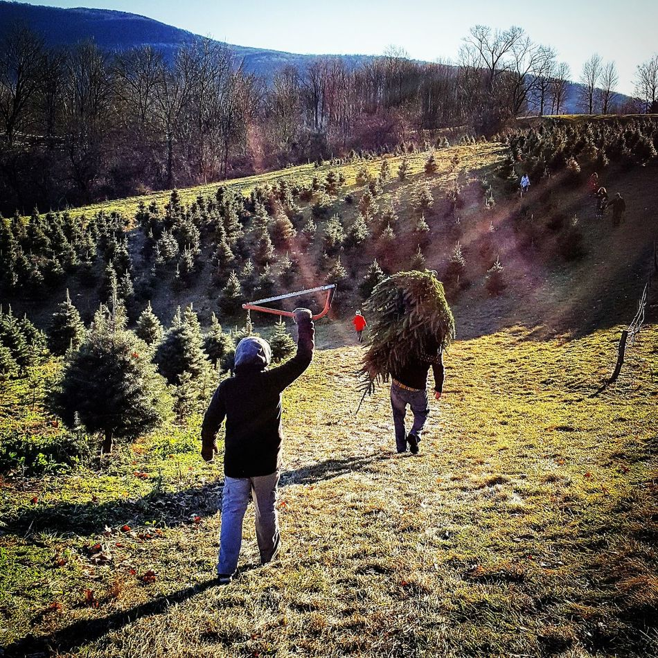 Christmas Tree ChoppingItDown