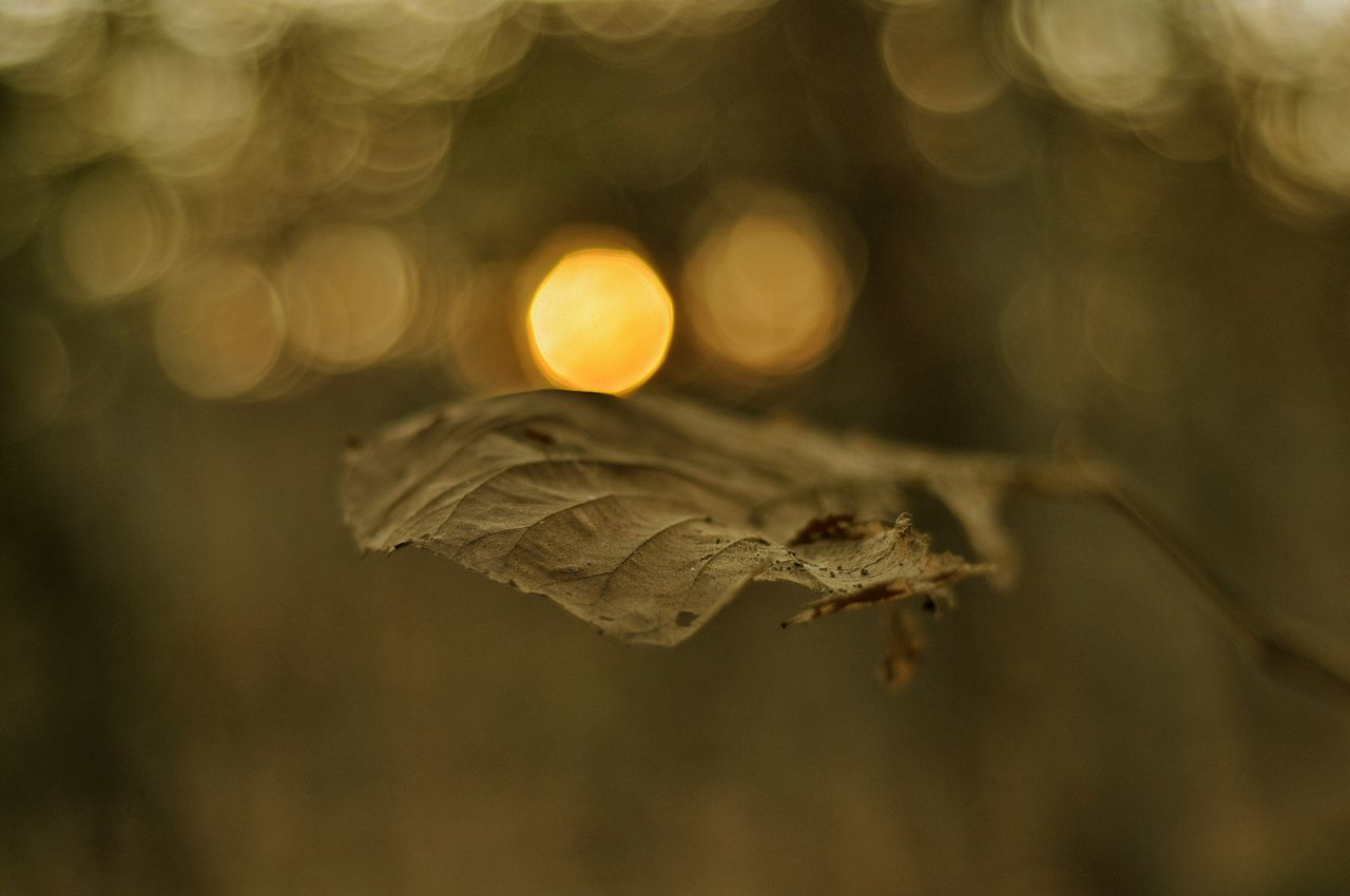 The Golden Leaf Leaf Golden Hour Golden Photography Photooftheday Sunlight Sunrays Likesforlikes Buyitnow