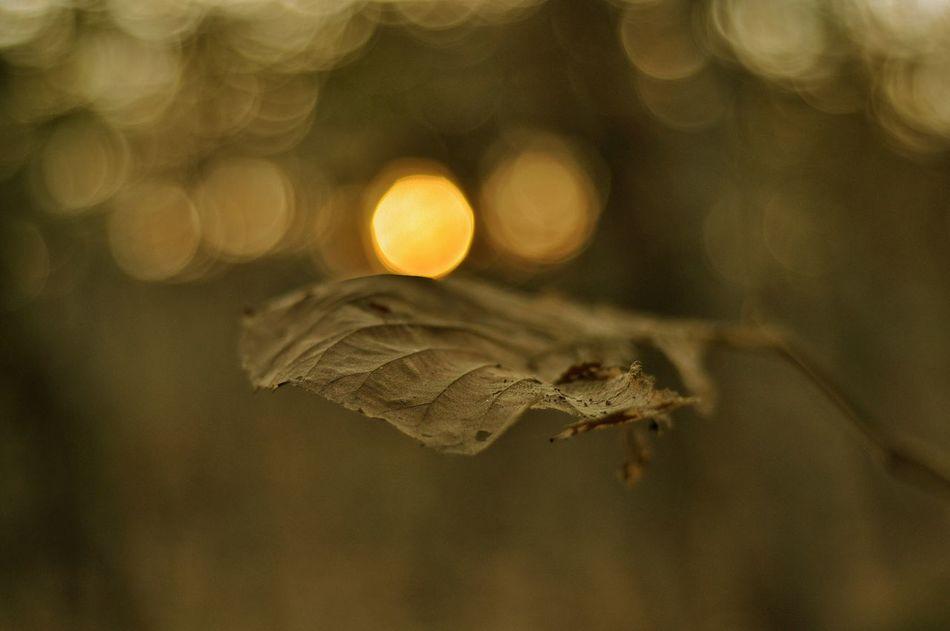 The Golden Leaf Leaf Golden Hour Golden Photography Photooftheday Sunlight Sunrays Likesforlikes Buyitnow