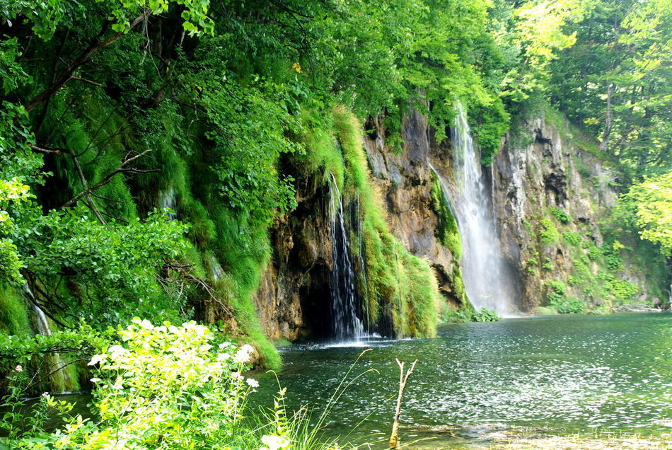 Plitvička jezera Beauty In Nature Environmental Conservation Fast Water Forest Forest Collection Forest Photography Forestwalk Green Color Green Water Lake Shore Lakeview Lakewood Motion Motion Water Natural No People Plant Plitvicka Jezera Scenics Silence Silence Of Nature Water Water Flow Waterfall Waterfall_collection