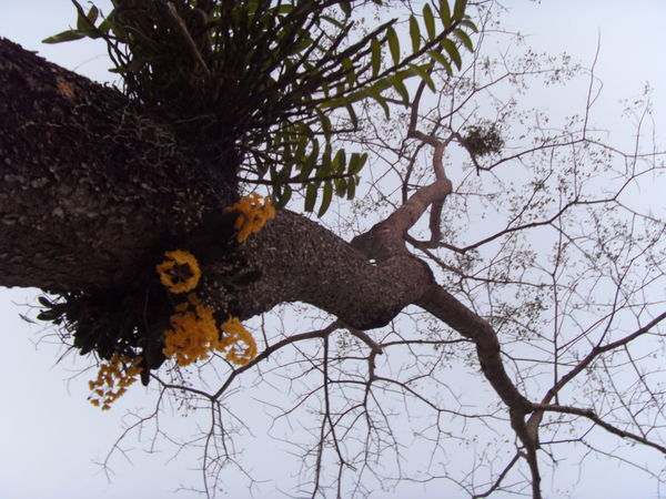 tree branches with yellow orchids Backgrounds Branch Change Close Up Cold Cold Temperature Day Focus On Foreground Full Frame Growth Leaf Low Angle View Nature No People One Animal Outdoors Tree Tree Trunk Winter Zoology