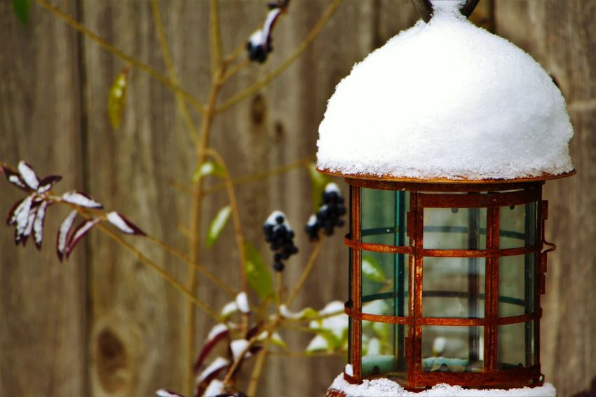Rustic lantern in winter Outdoors Close-up Cold Temperature Snow Winter Day Beauty In Nature Outside Cold Lantern Decoration Yard Decorations Yard Decor Art Birdhouse EyeEmNewHere EyeEm Best Shots EyeEmBestPics EyeEm EyeEm Gallery Antique Bronze Rustic Rusted Rusted Metal
