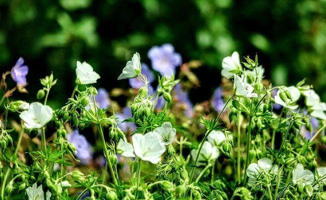 Flowers Summertime Plants And Garden Garden_world Blossoming  Blossoming Fresh & Bright Garden Flowers In Bloom