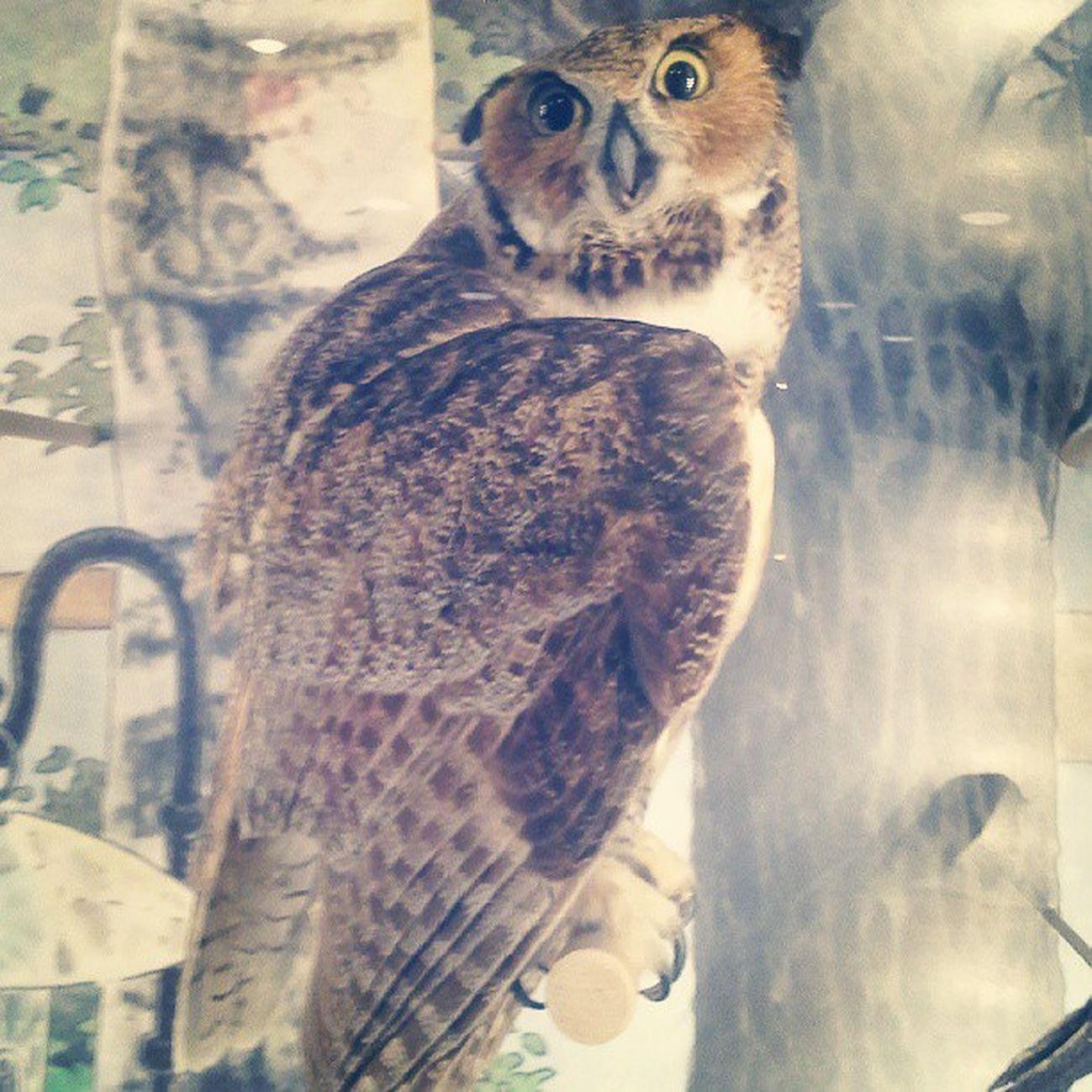 Crazy eyes Owl Bird BostonMuseumofScience