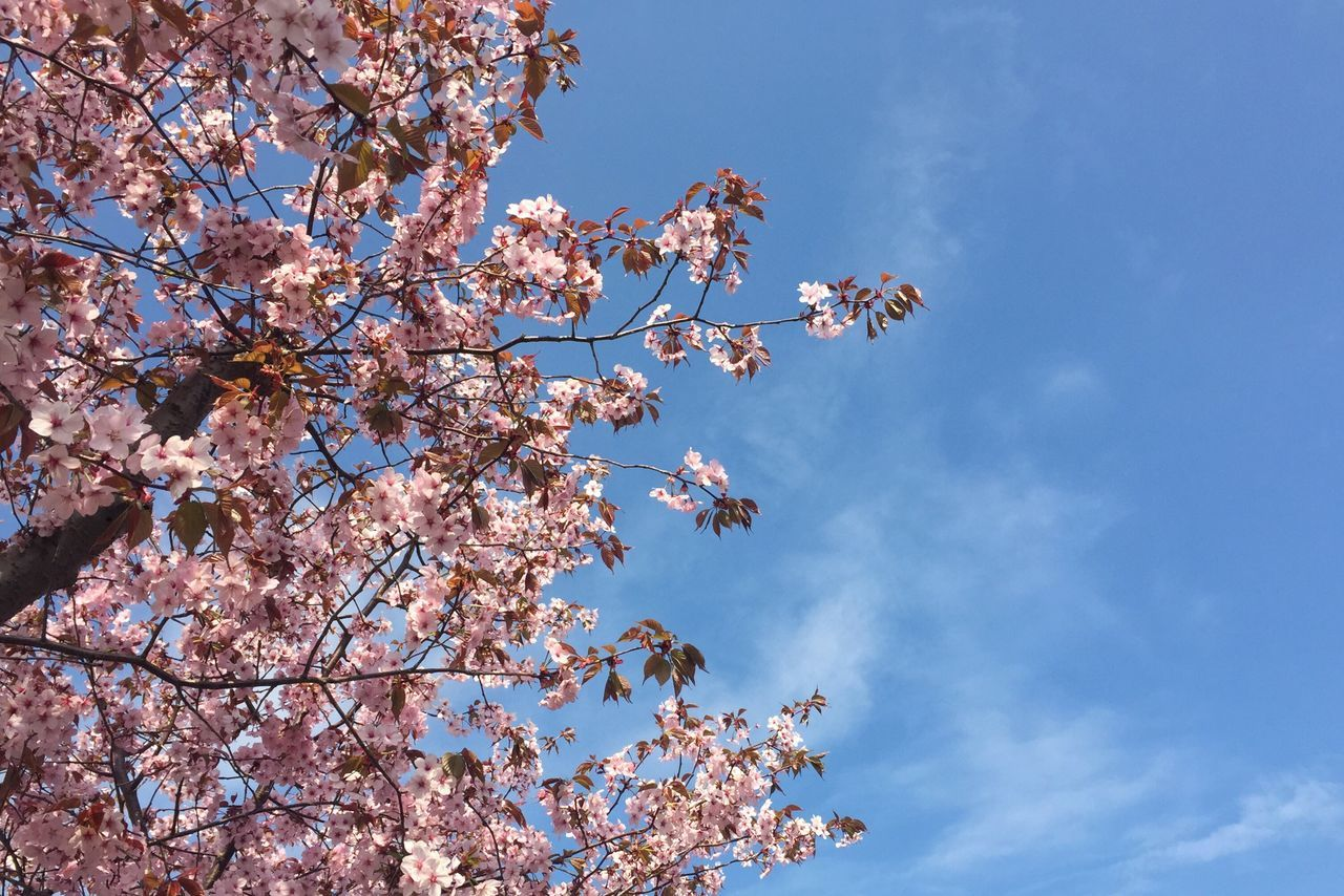 Hello, spring. Spring Springtime Blossom Sunshine Blue Sky Pink Pink Blossom