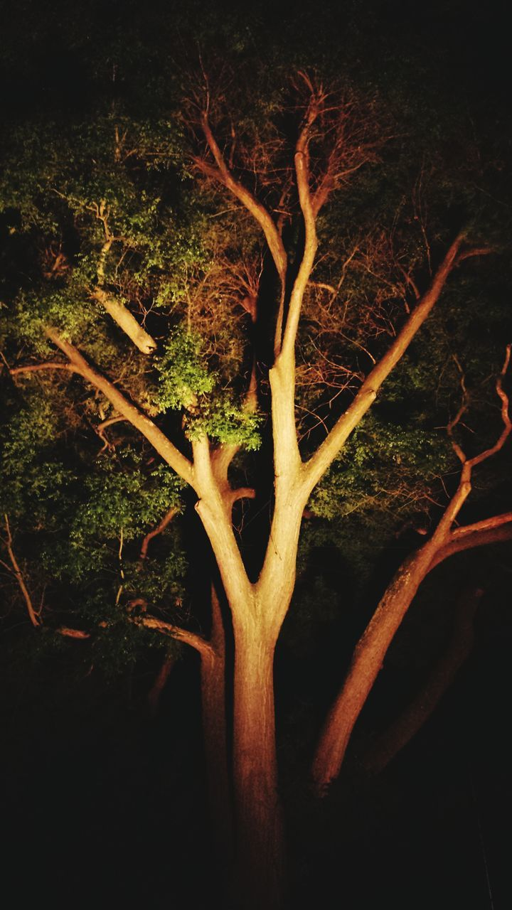 tree, tree trunk, night, nature, no people, growth, beauty in nature, outdoors, close-up