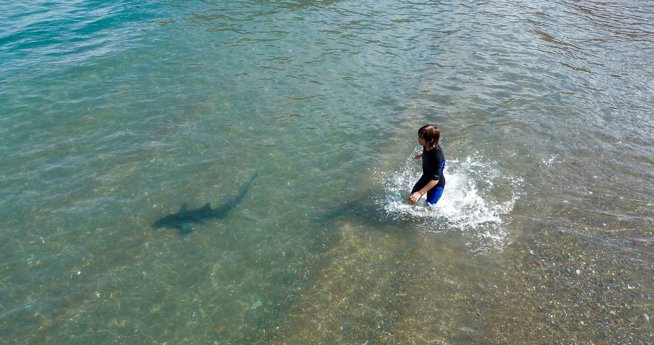 Leopard shark Boy ocean Beach Life Catalina island Boy Following Shark overhead Catalina Island  Leopard Shark Ocean Pacific Ocean Summer Boy In Wetsuit Shallow Water Adventurous Clear Water Beach Southern California The Great Outdoors - 2017 EyeEm Awards Live For The Story