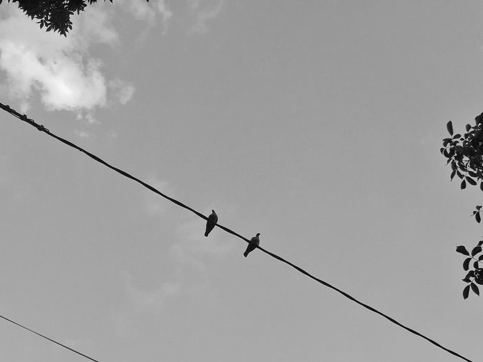 Animals In The Wild Silhouette Bird Animal Themes Sky Nature Beauty In Nature Cloudporn Cloud - Sky Clouds EyeEmBestPics Eye4photography  Paysage EyeEm Best Shots Tranquil Scene France EyeEm Nature Bnw_collection Blackandwhite Photography Bnw Blackandwhite