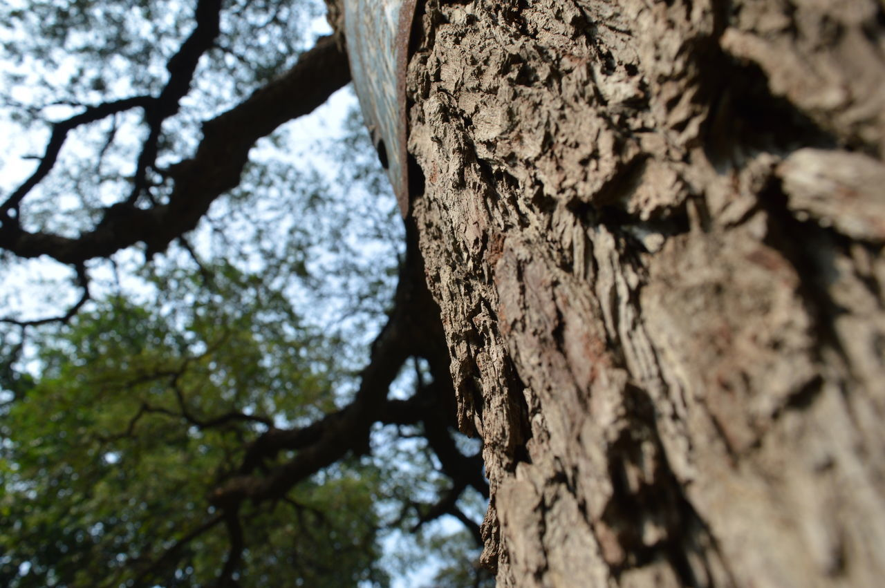 tree, tree trunk, textured, low angle view, nature, rough, no people, day, bark, focus on foreground, beauty in nature, close-up, outdoors, growth, sky