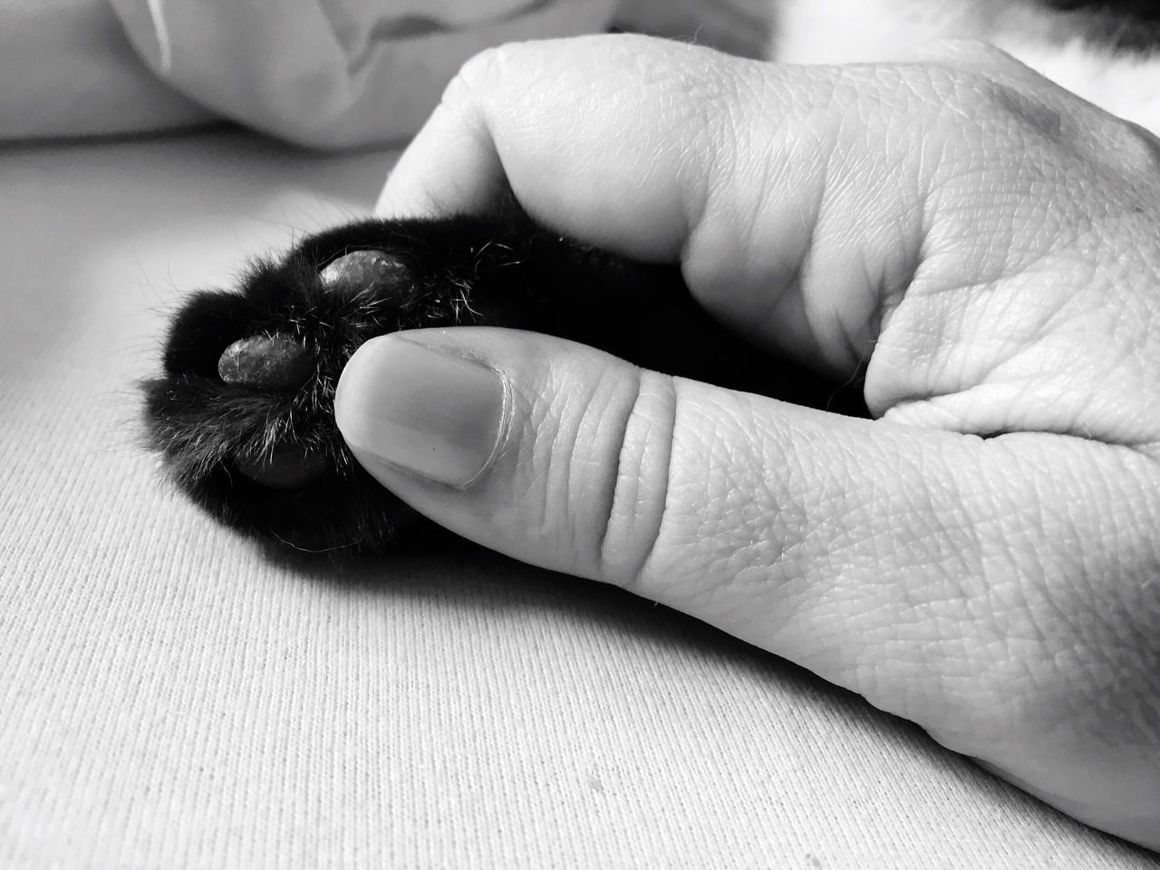 human body part, one animal, animal themes, close-up, human hand, real people, indoors, one person, mammal, day, people