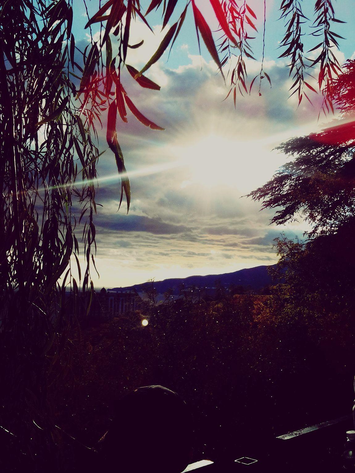 Beautiful Day Sun ☀ Autumn Colors Tree And Sky