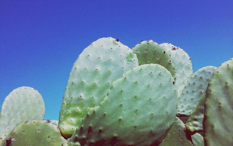 Cactus Leaf Cactus Blue Sky Clear Day Growing Minimal