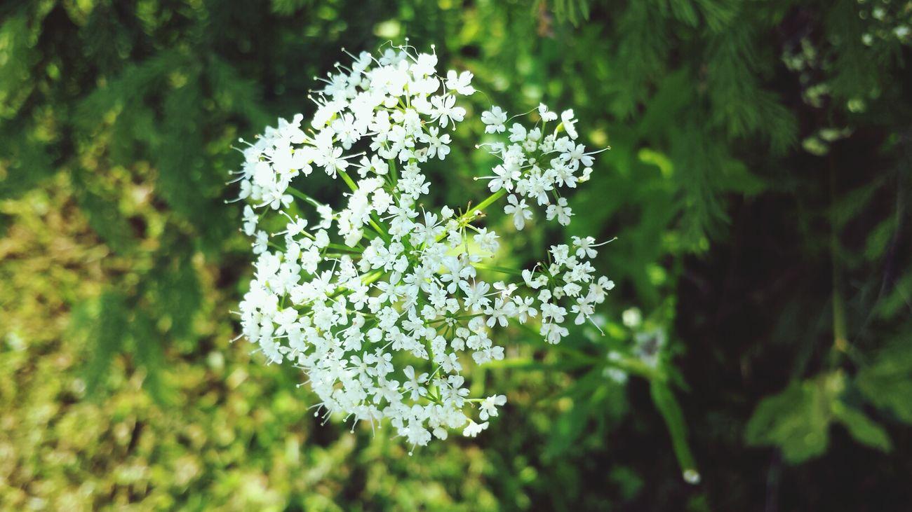 Flower Green White Galaxys4