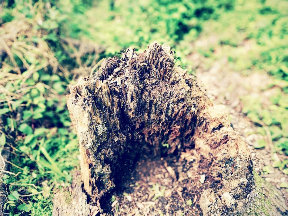 Nature Naturelover First Eyeem Photo
