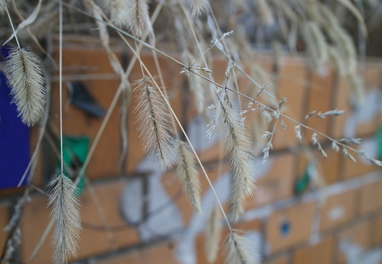 Autumn Brick Brown City City Street Close-up Day Fall Focus On Foreground Foxtail Fragility Grass Nature No People Outdoors Plant Sidewalk Street Wall Wind