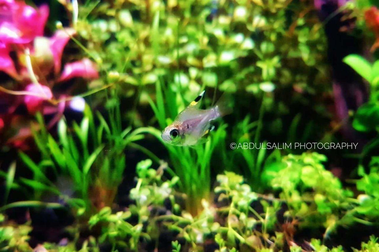 Beauty In Nature Phonegraphy Aquatic Plants Nanotank Aquarium Photography Nano Fish Aquarium Life Samsung Galaxy S7 Edge Tetras Underwater Aquarium Green Color