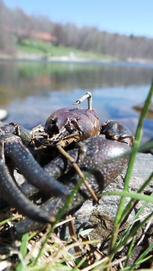 Check This Out Crawdaddy Taking Photos Crawdad Crayfish Fishing On The Rocks Water_collection Cooked Seafood Crustacean Fishing Water Reflections Enjoying Life Windy Day Lakeview Springtime Sunshine ☀ Fundaysunday Rocks And Water On The Lake Lake View Blue Sky Up Close And Personal