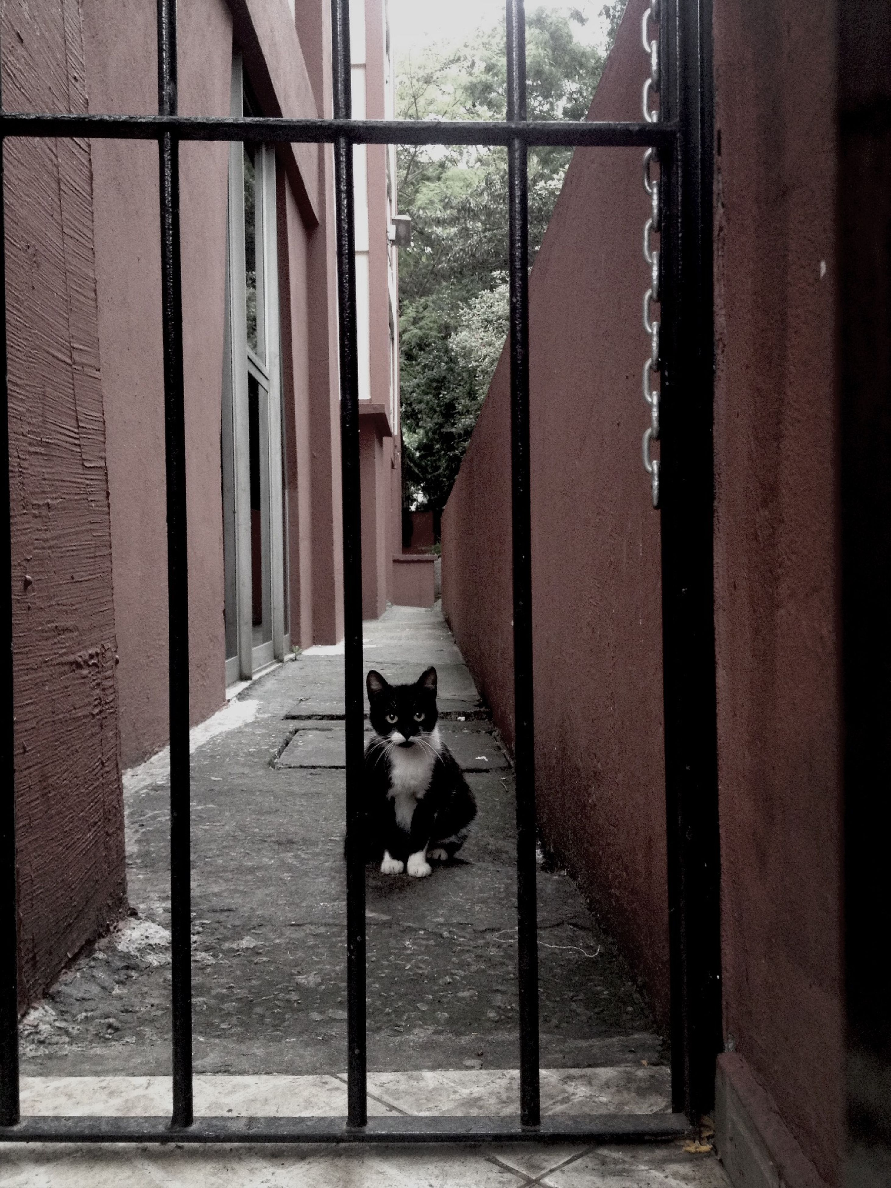 domestic animals, pets, mammal, one animal, architecture, animal themes, built structure, building exterior, domestic cat, dog, cat, house, window, residential structure, feline, wall - building feature, residential building, street, building, door
