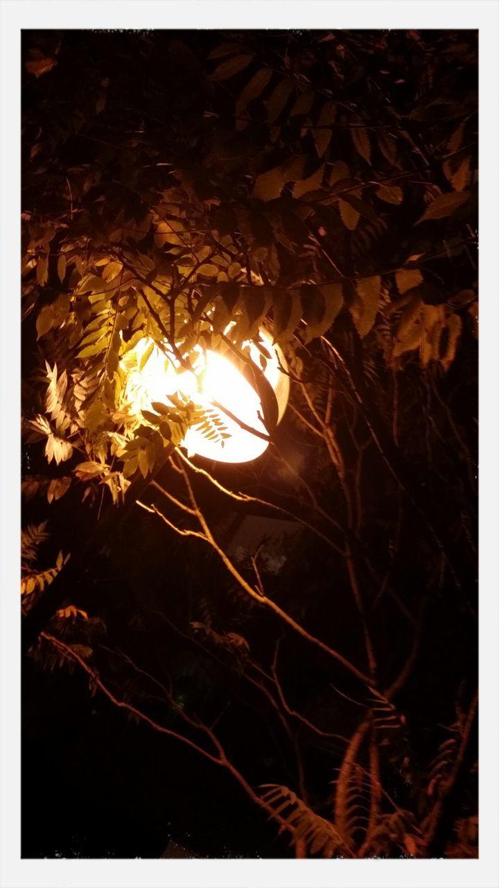 night, no people, leaf, close-up, outdoors, nature, illuminated
