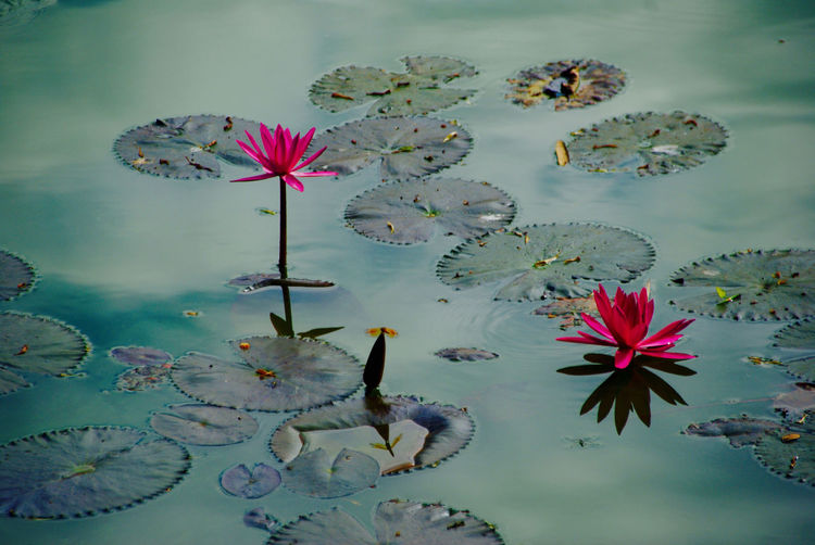 Beauty In Nature Blooming Close-up Day Floating On Water Flower Flower Head Fragility Freshness Growth Lake Leaf Lily Pad Lotus Water Lily Nature No People Outdoors Petal Plant Water Water Lily Perspectives On Nature