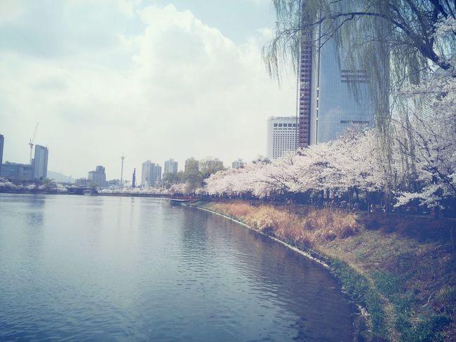 Hi! Taking Photos Enjoying Life cherry blossoms