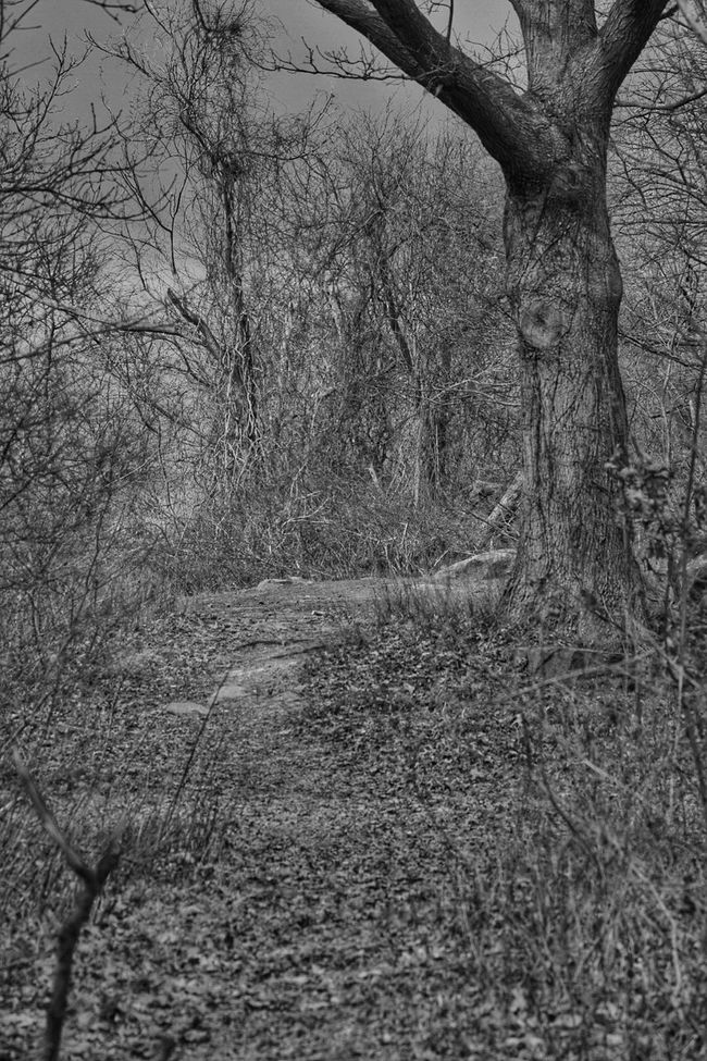 Spooky. Landscape_photography Landscape #Nature #photography EyeEm Best Edits EyeEm Best Shots - Black + White Nikon_photography_ Nikonphotographer Nikond3300 Nikonphotography Nikontop Picoftheday Black And White Blackandwhite Photography Black And White Portrait Amateurphotographer  Eye4photography  EyeEm Masterclass Lightroom EyeEm Best Shots NikonLife Nikon Photoflexx Monochrome