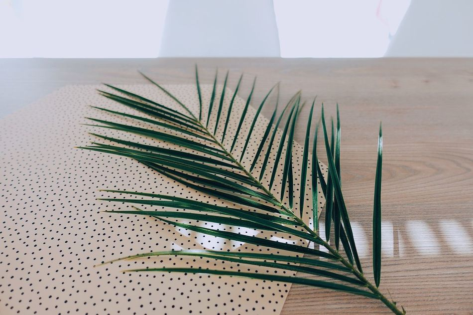 Spring Springtime Leaf Indoors  Table Close-up Nature Nature_collection Green Color Sunlight Sunny Sunday Sunshine Pink Color White Daylight Day Plant Minimalism Minimal Focus On Foreground No People Style Modern Home Art Is Everywhere Break The Mold TCPM