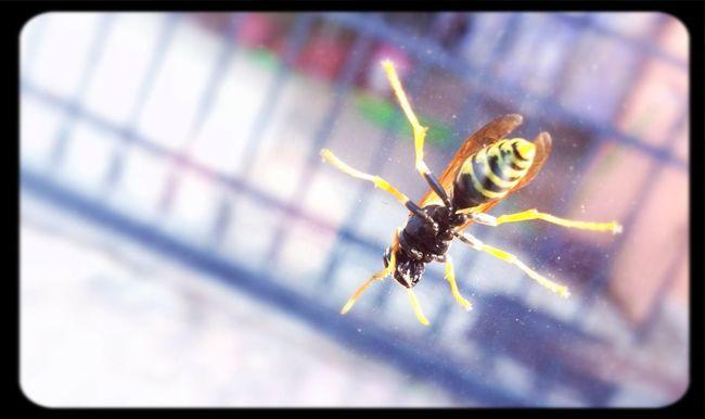 Snapshot A Hornet