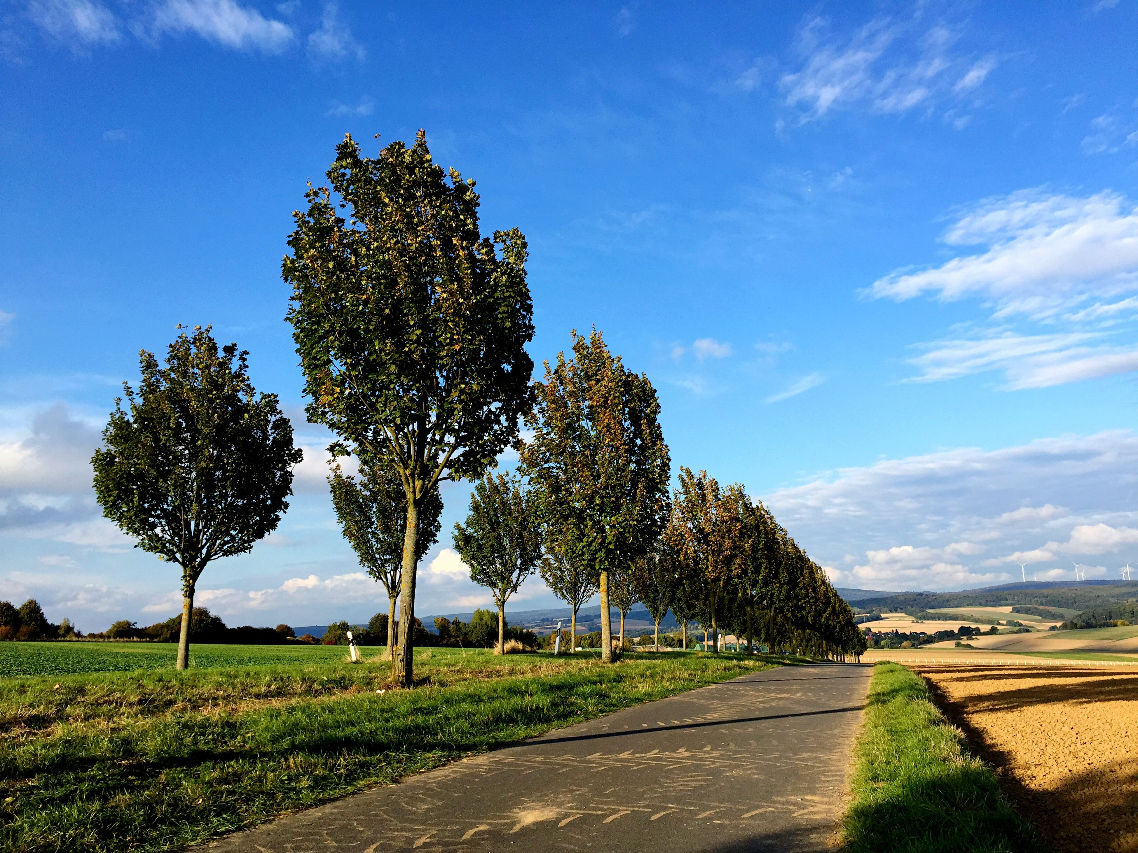 tree, road, the way forward, transportation, tranquil scene, nature, day, scenics, landscape, tranquility, sky, outdoors, field, beauty in nature, no people, growth, cloud - sky, rural scene, grass