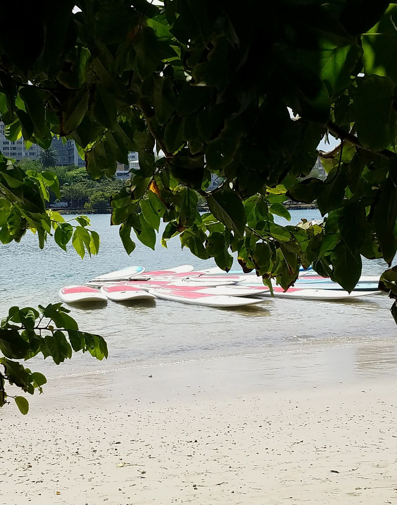 Beach Nature Water Leaf Outdoors Beauty In Nature Branch Scenics Freshness No People Shapes And Colour Perspective Floating On Water Aquatic Sport Urban Exploration Pedalboard Adventure Open Edit Leisure Activity Waterscape Water Sports Looking To The Other Side Pattern Light And Shadow San Juan PR