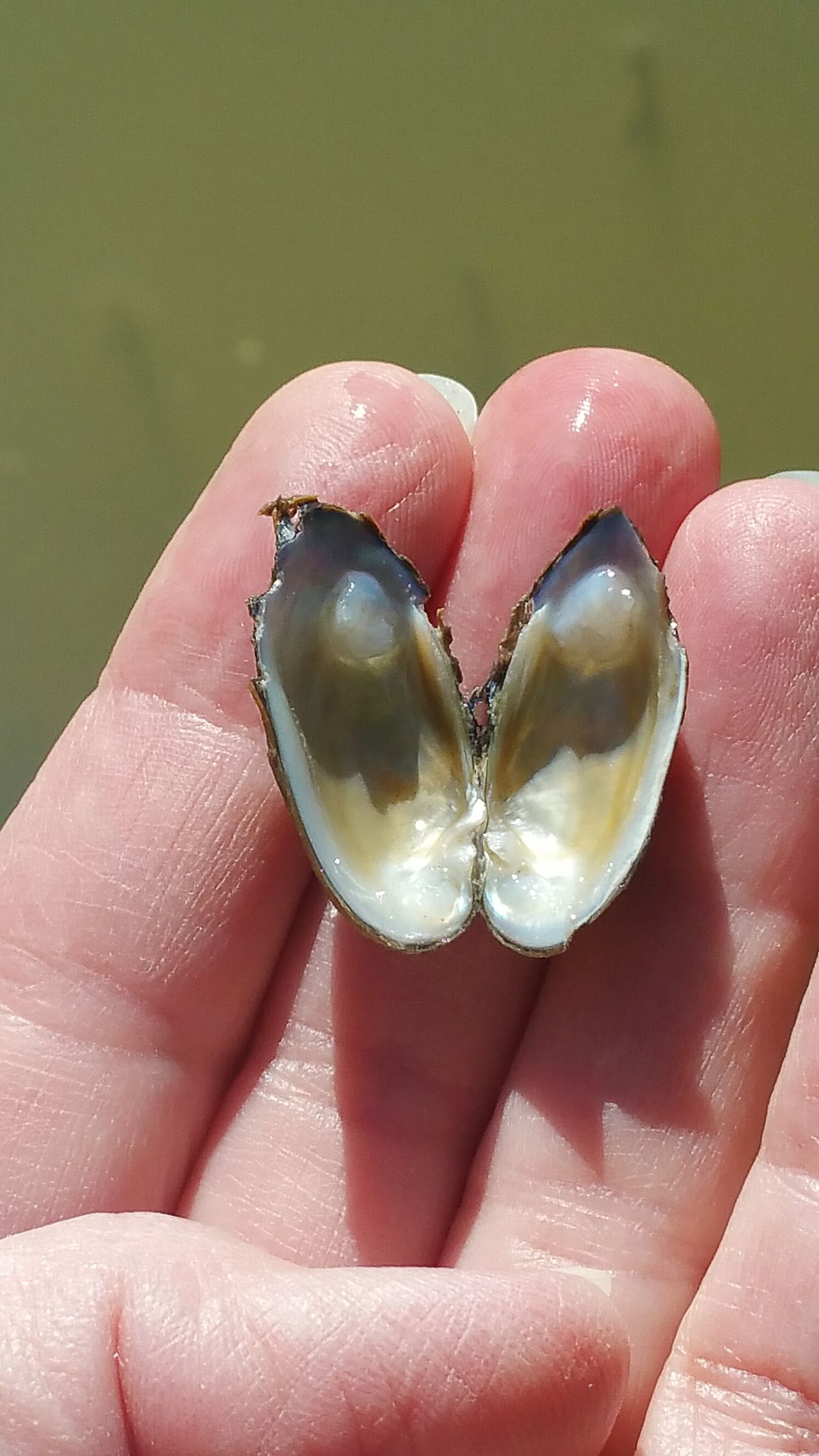 Looks like someone had a snack Human Body Part Human Hand Close-up One Person People Indoors  Day Adults Only Adult Beauty In Nature Eyemphotos Popular Photos Photography Naturephotography Naturelovers Eye Em Nature Lover Outdoors Mussel Shell Environment My Photography