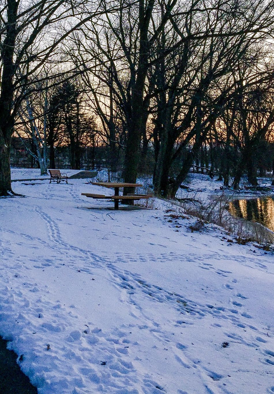 Winter Wonderland Snow Covered Bench Picknickbench BareTrees Footsteps Oswego, IL IPhoneography Tranquil Scene