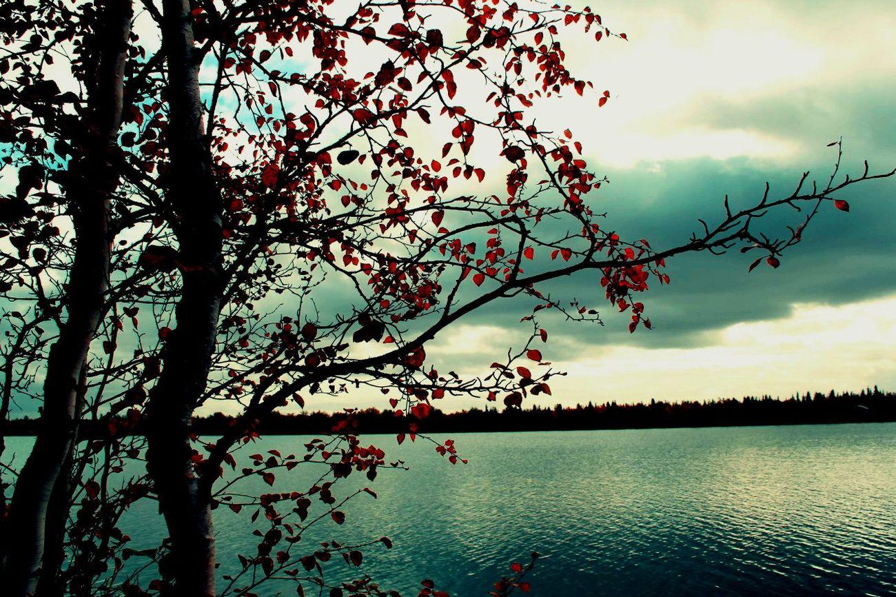 Relaxing Beautiful Place люблю Осень 🍁🍂 она прекрасна