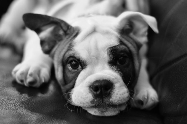 Puppy Depth Of Field Dogs Cute Pets Pets Dog Love Aniamls