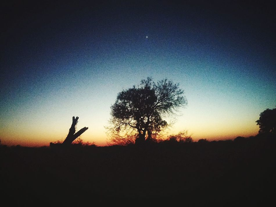 Good nigth world My Treeeee TreePorn Clouds And Sky Sunset #sun #clouds #skylovers #sky #nature #beautifulinnature #naturalbeauty Photography Landscape [a:17743] Taking Photos Che