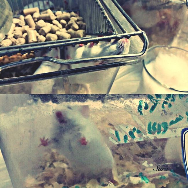 Animal lab- ازمایشگاه فارماکولوژی -کت با حیوانات😍😍🐭🐭 MyUniversity Animal Lab Pharmacology Lovelovelove❤