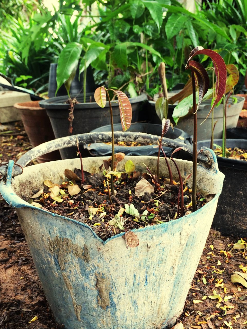 growth, potted plant, plant, day, no people, outdoors, nature, close-up, leaf, tree, beauty in nature