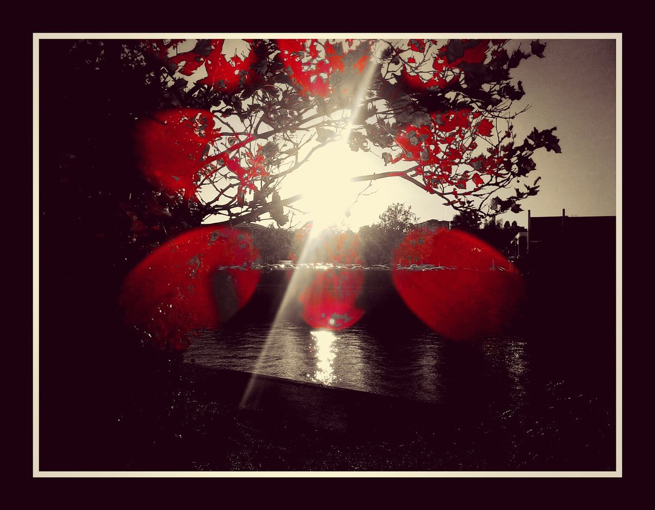 lens flare, no people, red, close-up, sun, sunlight, indoors, tree, day, nature